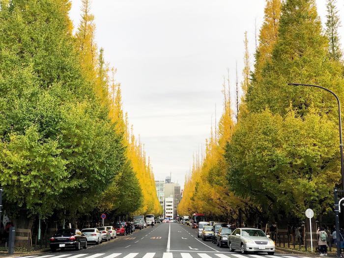 Autumn landscape in Tokyo
